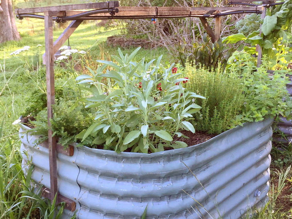 IMG_1016-Bilby-Herb-Garden-_-irrigation.jpg