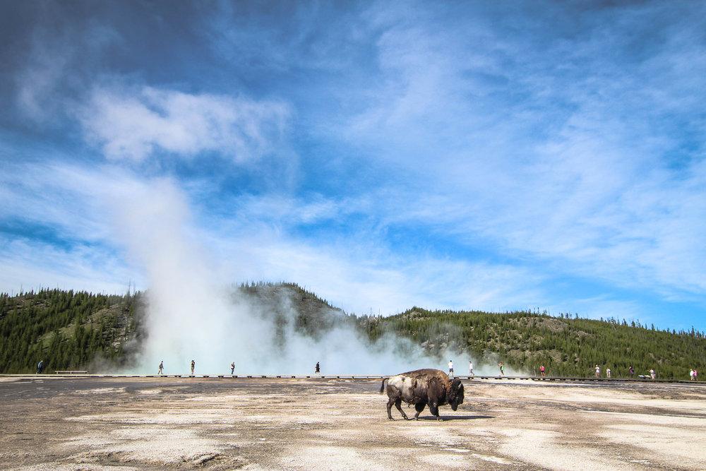 Yellowstone National Park // Photo: Me! (Randy Johnson)