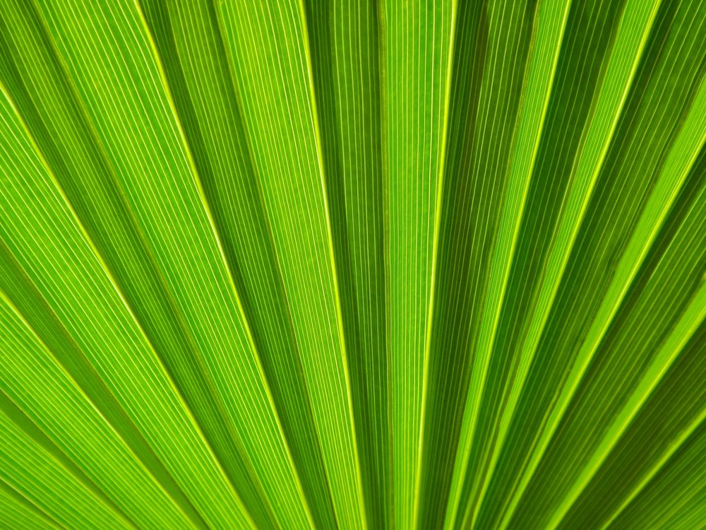 green-palm-leaf-detail-1442738025m1i.jpg