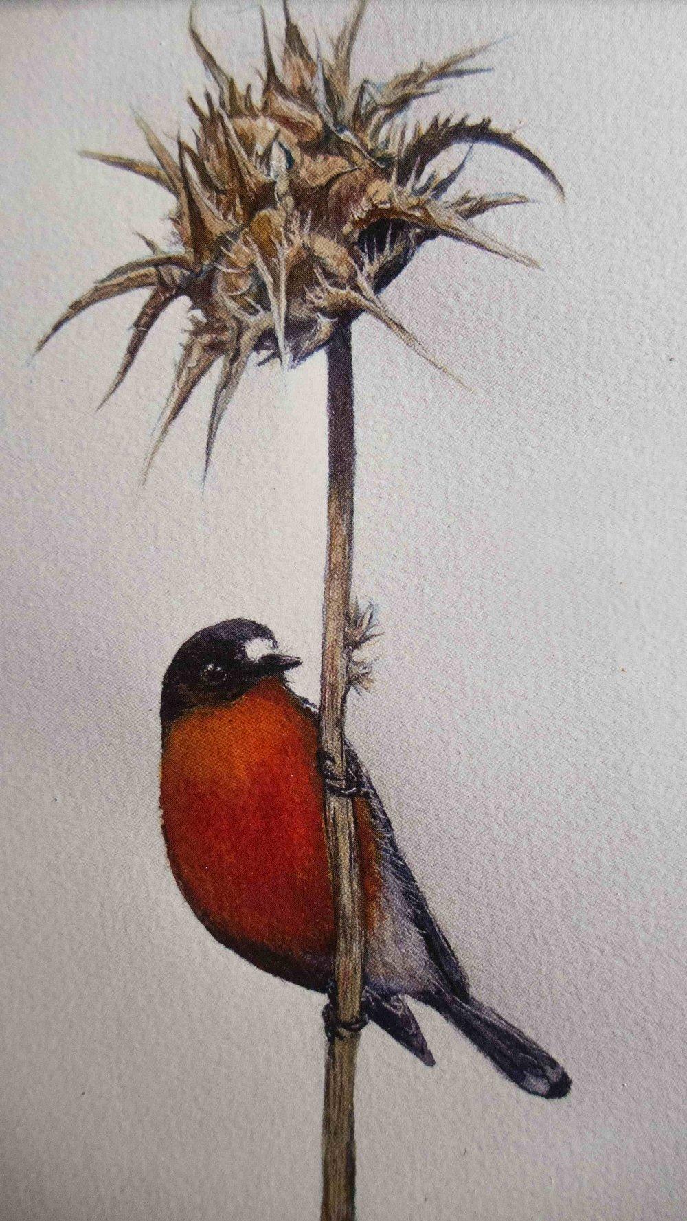 Mel Hills red bird.jpg