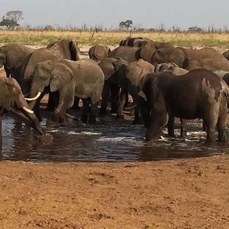 Open Watering Holes For Elephants and Other Wildlife to Prevent Human Animal Conflict and Destruction of Their Own Environment