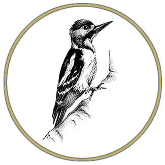 woodpeckerz_specht_homepage.png