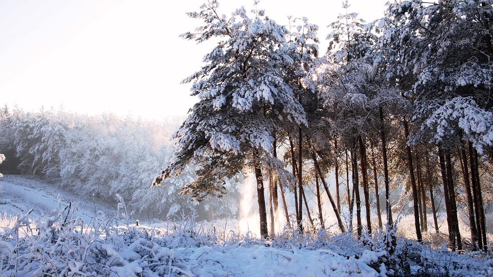 forest-1060950_960_720.jpg