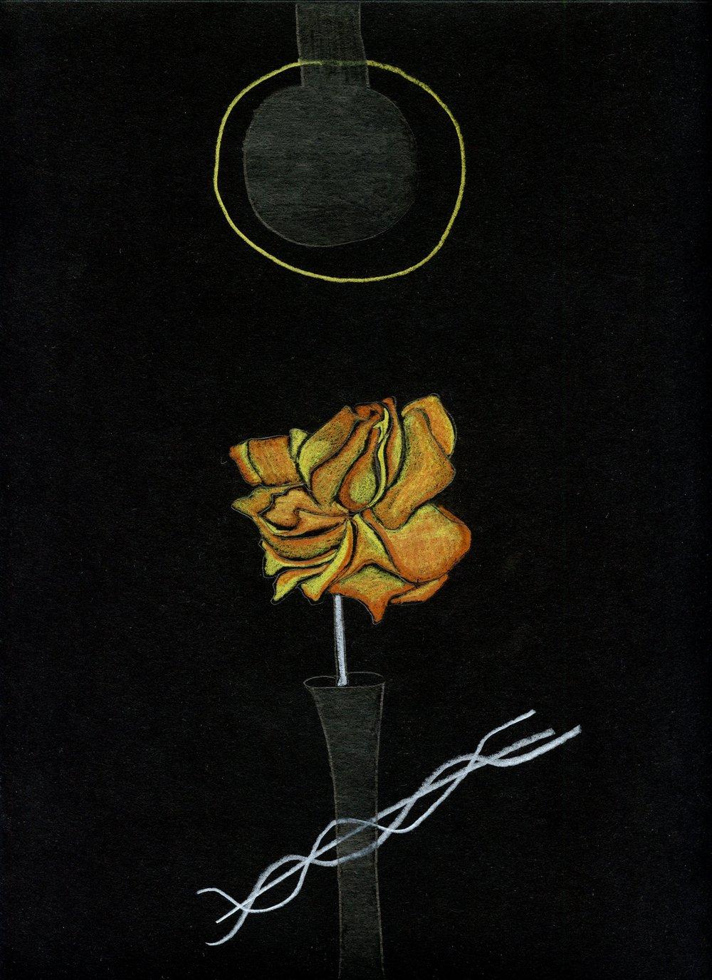 black paper018.jpg