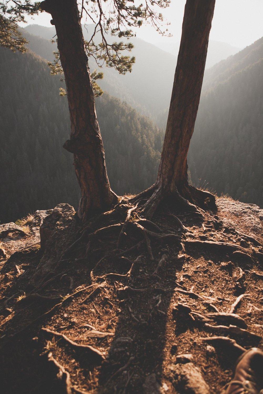 korene stromu na tomášovskom výhlade | slovenský raj davidsimko