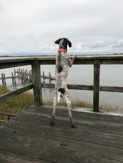 Jackson looking out at the wild ponies of Assateague Island