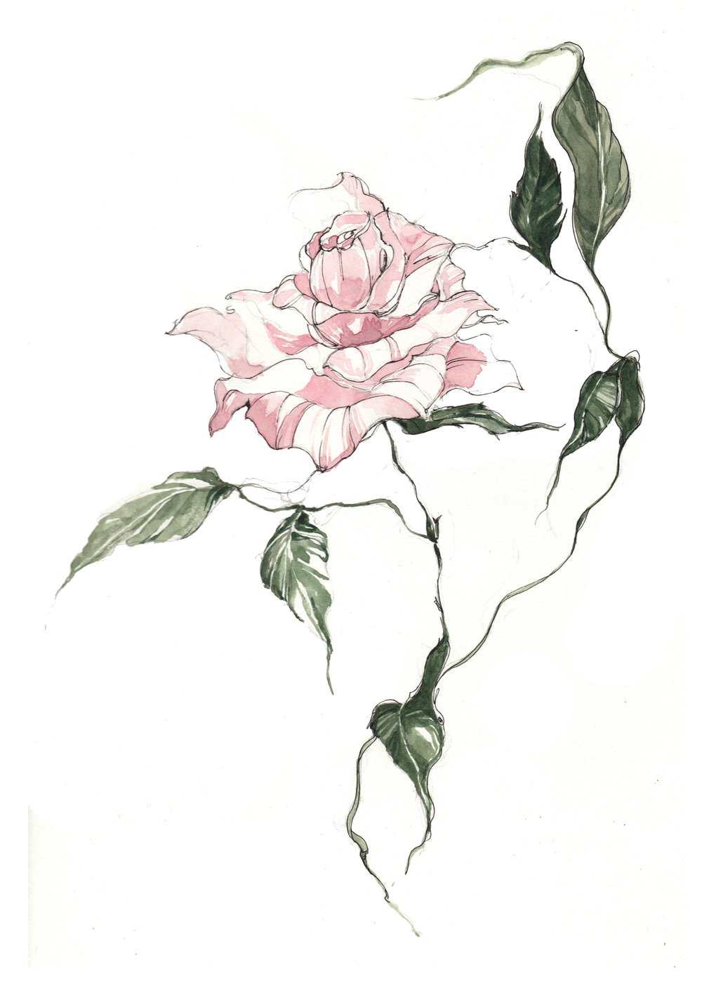 STANDARD ROSE_BOTANICAL_HARRODS.jpg