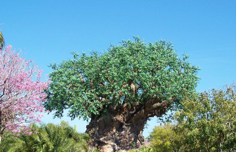 Tree of Life, Discovery Island, Animal Kingdom