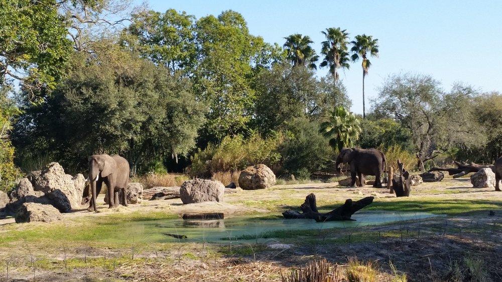 Kilimanjaro Safaris, Africa, Animal Kingdom