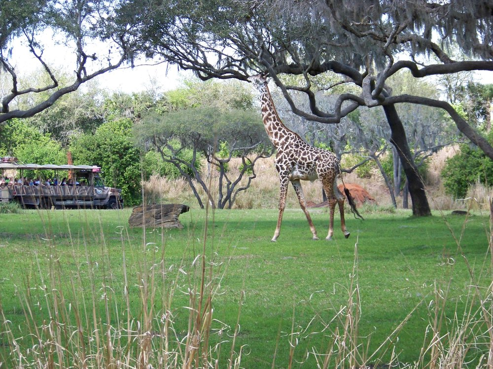 Kilimanjaro Safaris 12