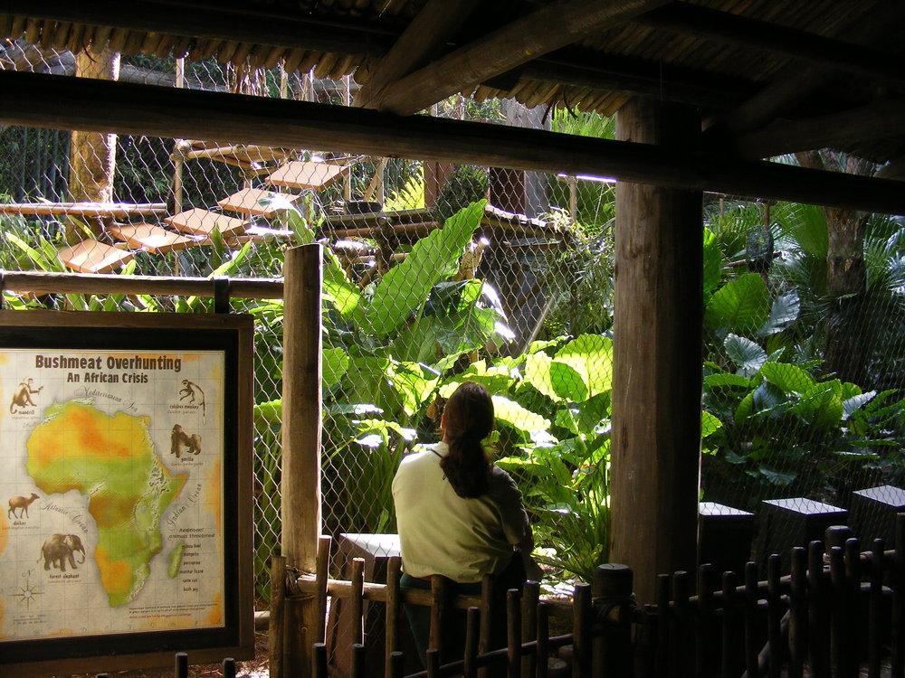 Gorilla Falls Exploration Trail 2