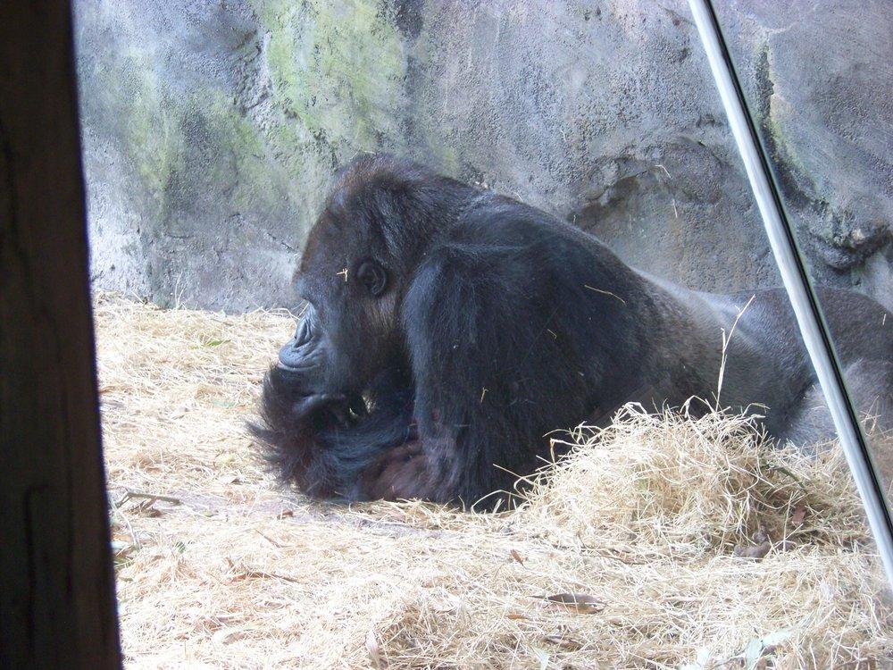 Gorilla Falls Exploration Trail 4