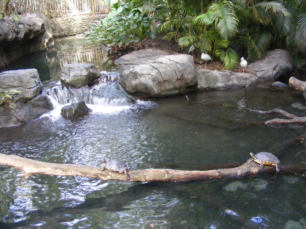 The Oasis Exhibits 2