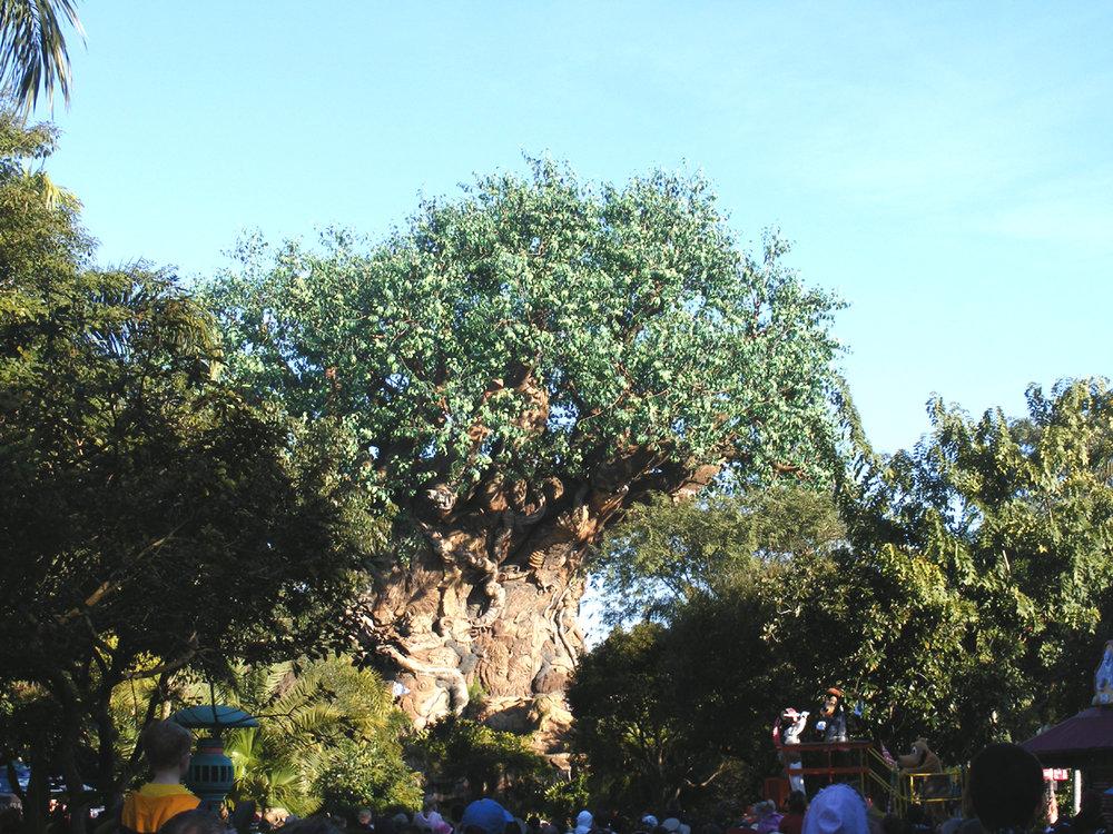 Tree of Life, Discovery Island, Disney's Animal Kingdom, Walt Disney World