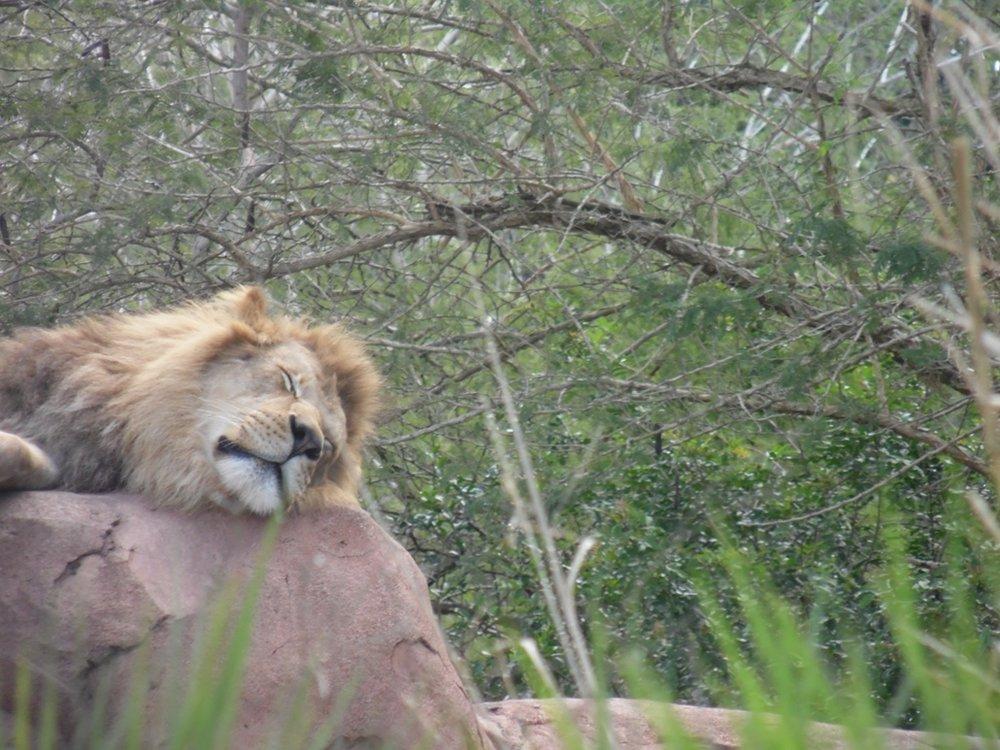 Animal Kingdom Main.JPG