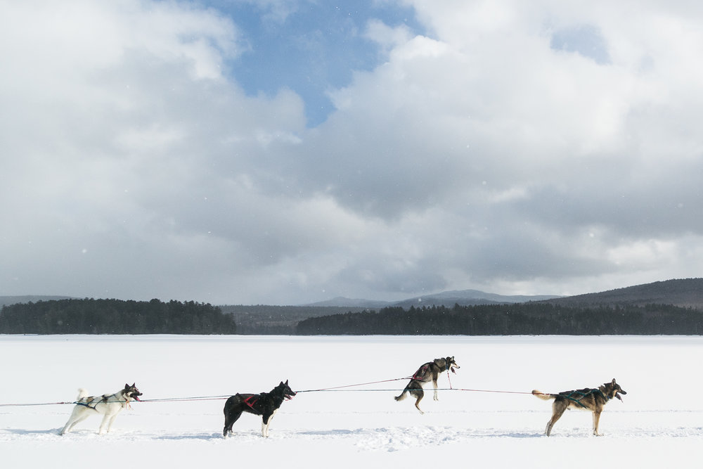 reighley_dogsled-6876.jpg