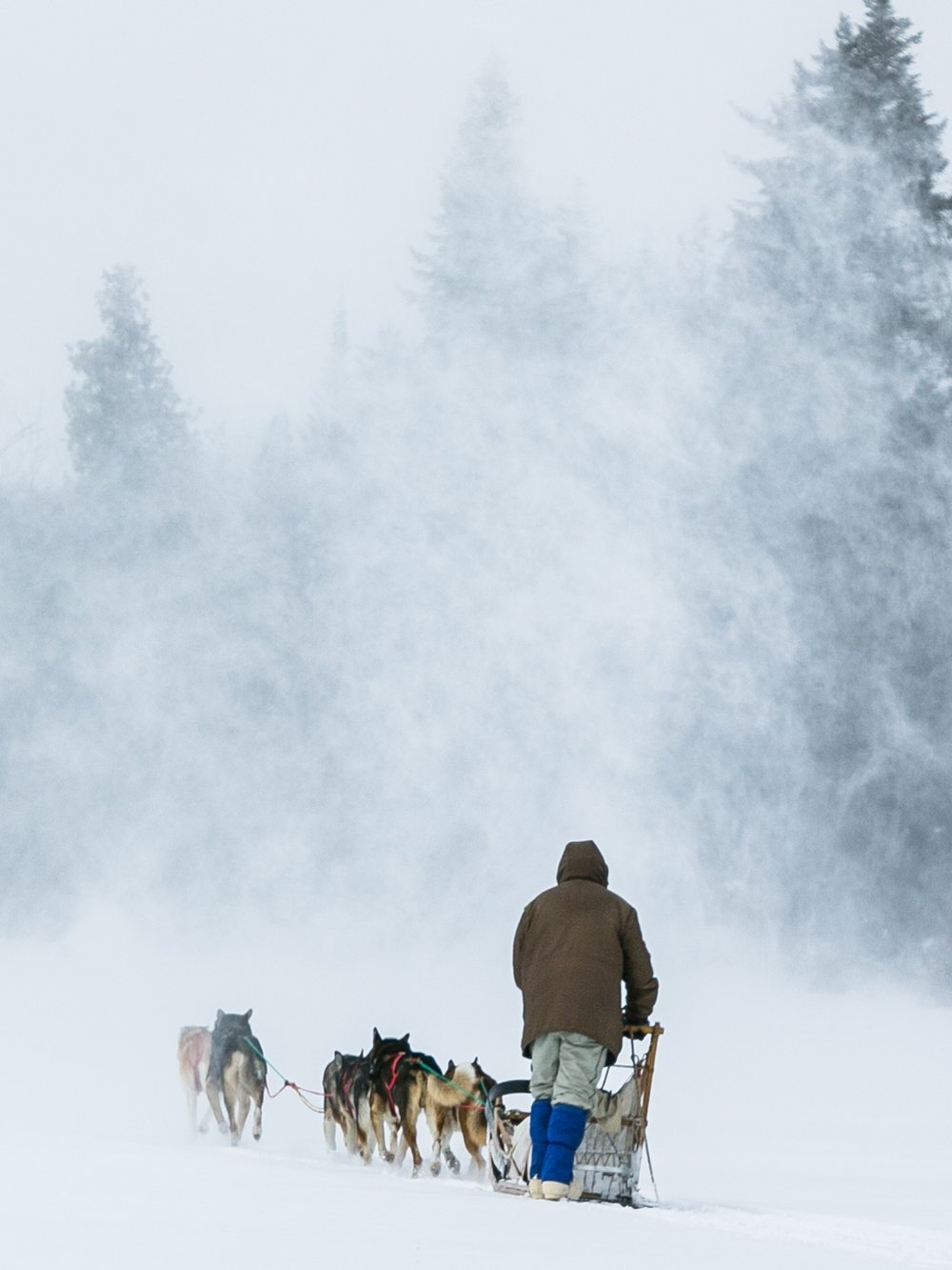 reighley_dogsled-8025.jpg