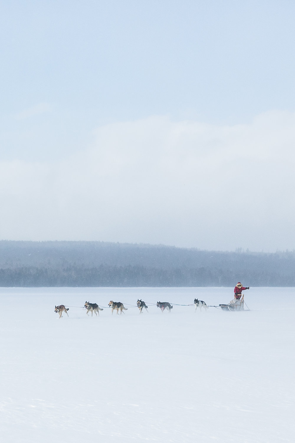reighley_dogsled-7244.jpg