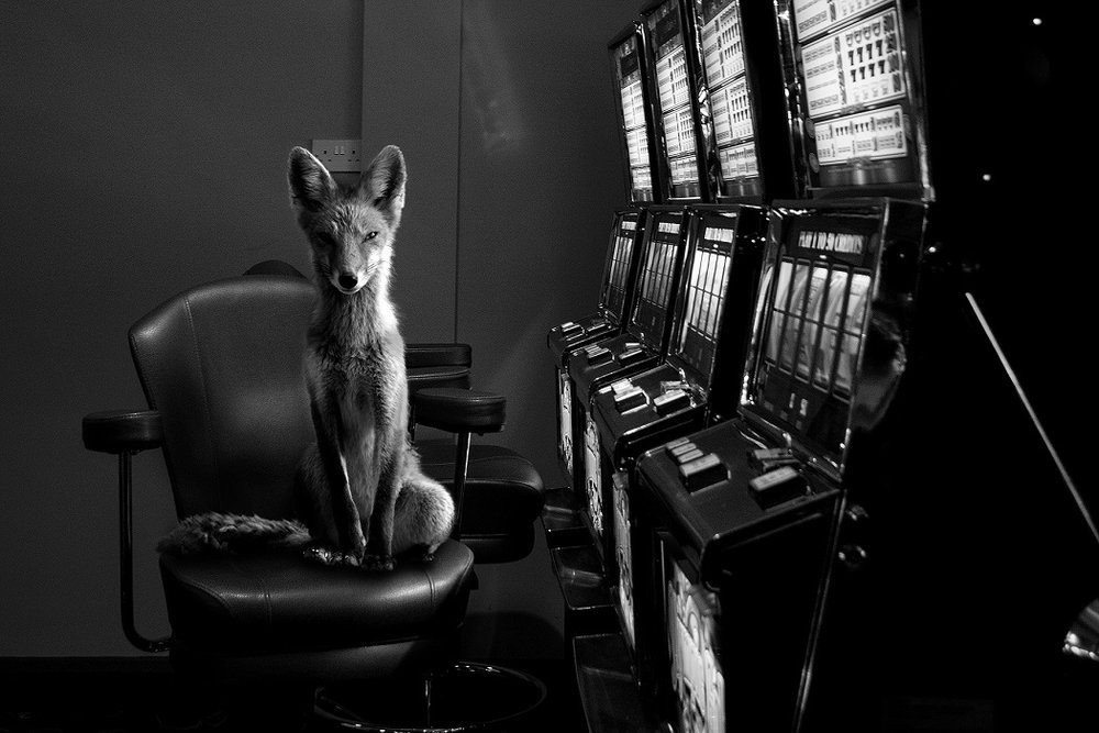 Jason McGroarty Ireland
