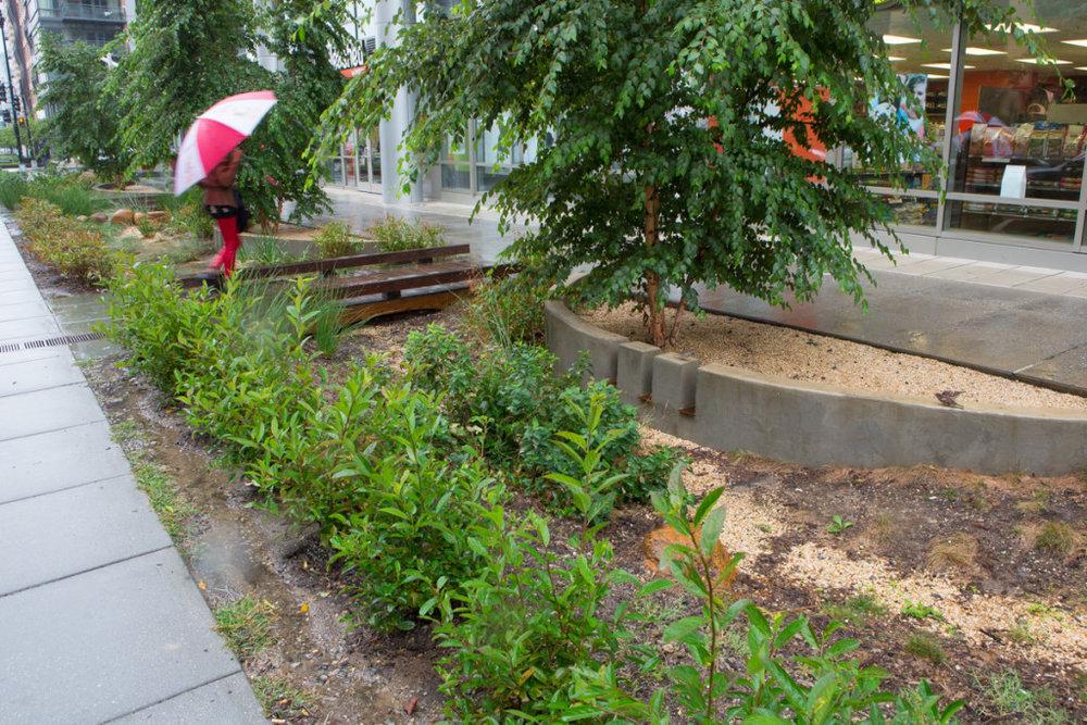RainPay Gardens