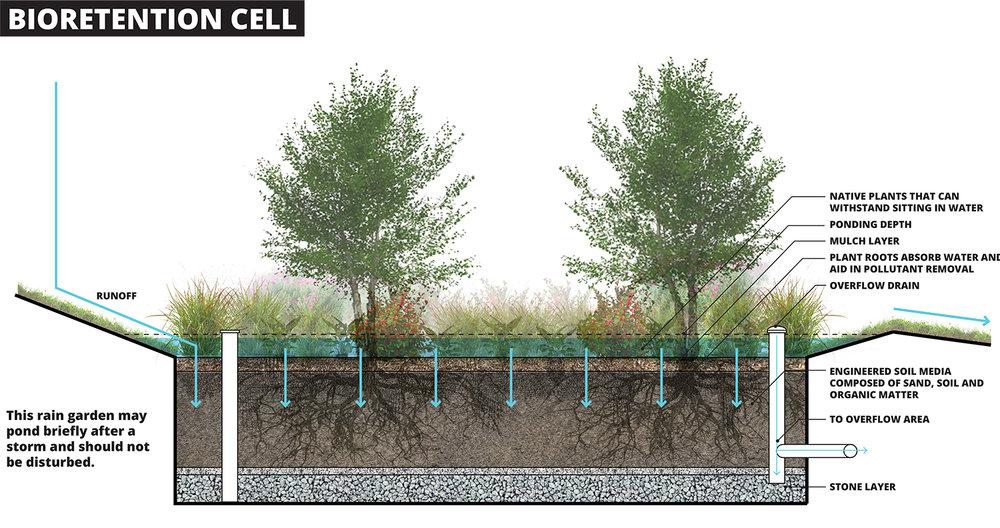 bioretention_cell_web.jpg