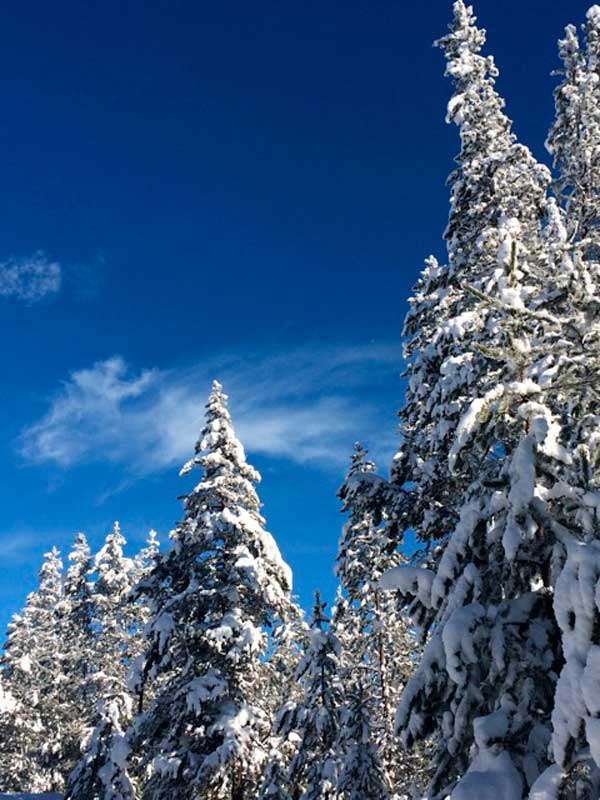 Sunriver's Winter Beauty