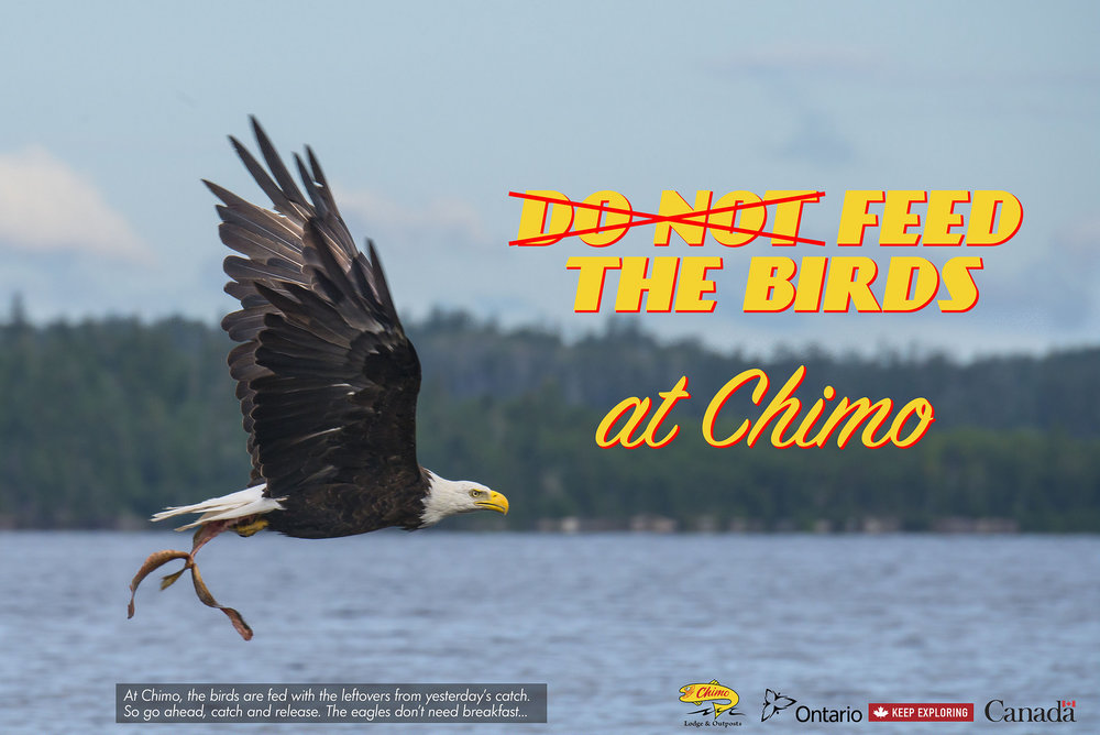 "At Chimo - ""Feed the Birds"" (Spec Ad)"