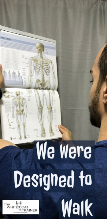 We are composed of 206 bones and 360 joints.. all designed to make us move -
