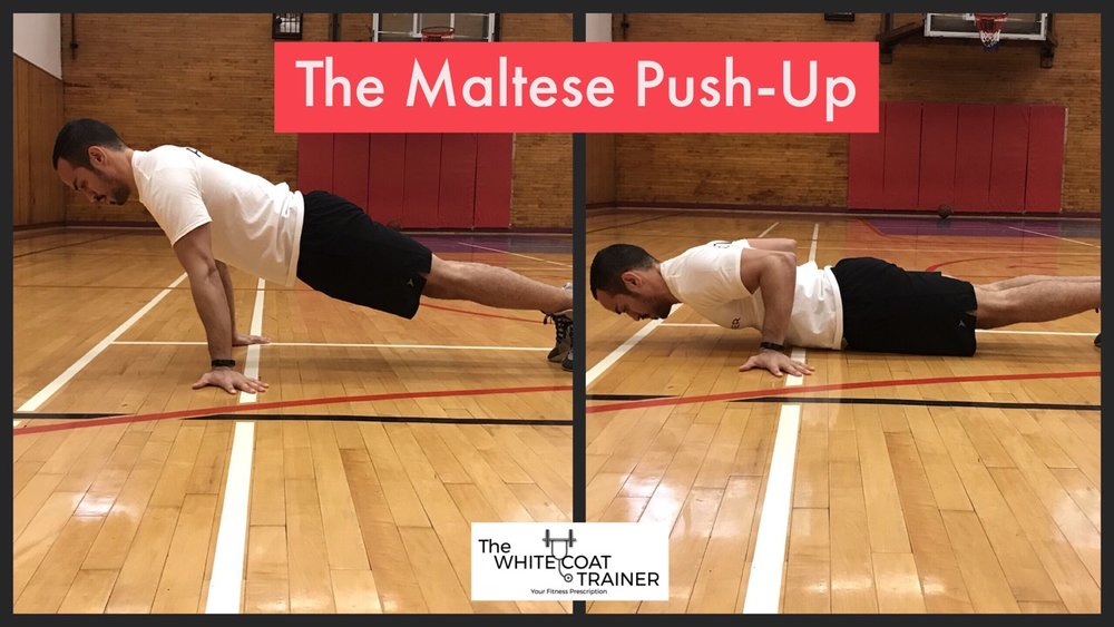 maltese-push-up