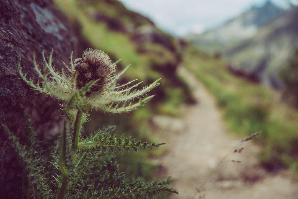 A szorongásra való hajlam mindenkinél egyéni, s mind genetika, mind környezeti hatások által meghatározott. -