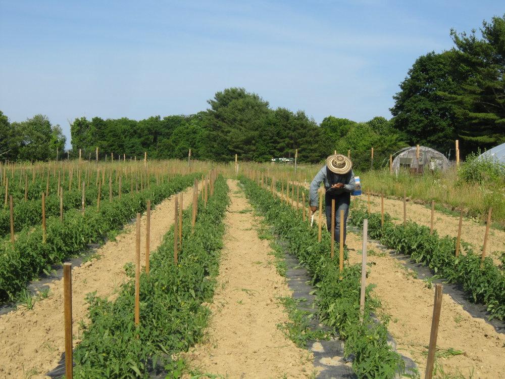 farm2014 IMG_4330.JPG