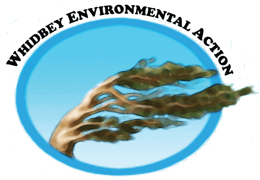 WEAN Logo+.png