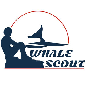 Whale Scout.jpg