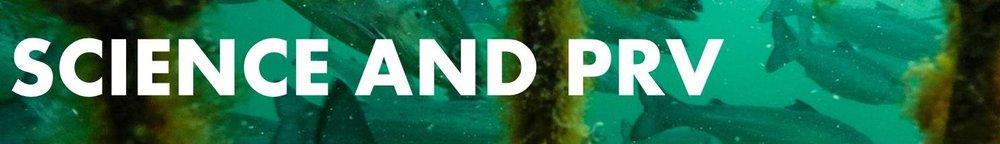 PRV Science banner.jpg