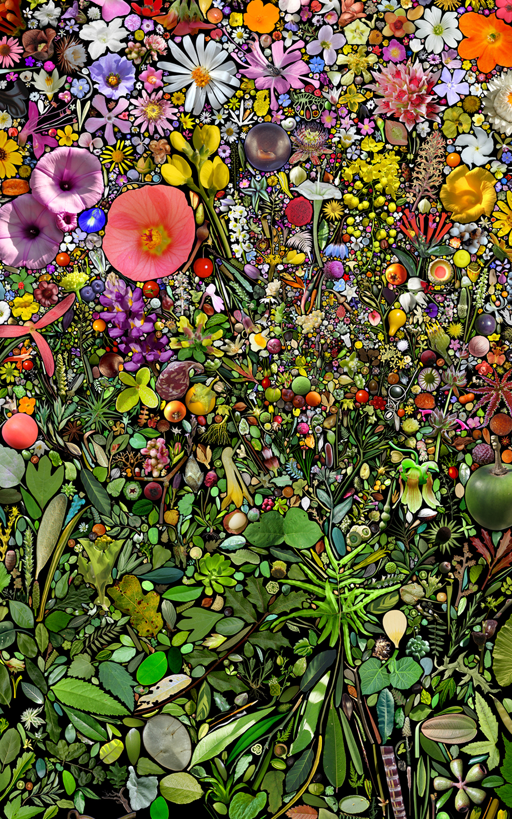 Case Simmons, Simmons & Burke, U.S. Plant Collection Palette, Still Lives and Common Names, Digital Collage, Digital Art, Photoshop Collage, Contemporary Collage, Case Simmons Art, Collage Fine Art, Plant Art, Digital Flower Art, Collection Art, Archive Art, Kohn Gallery