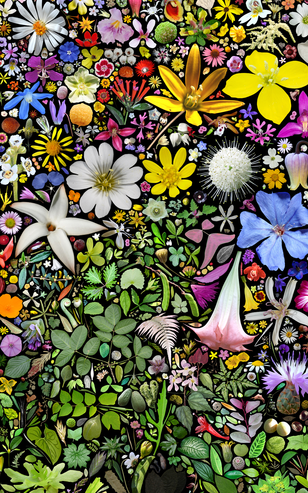 Case Simmons, Simmons & Burke, Plant Collection Palette #1, Digital Collage, Digital Art, Photoshop Collage, Contemporary Collage, Case Simmons Art, Collage Fine Art, Plant Art, Digital Flower Art, Collection Art, Archive Art, Kohn Gallery