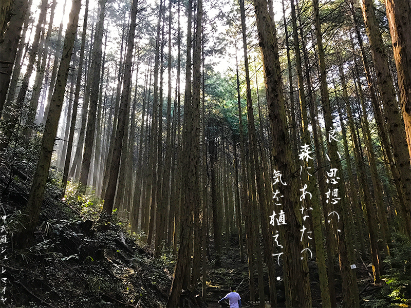 木と気の俳句.jpg
