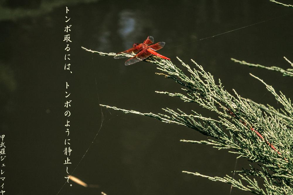 Tonbo-no-shinbo.jpg