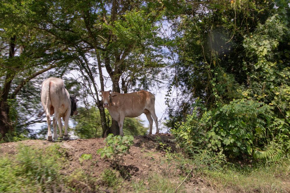 Myanmar-46.jpg