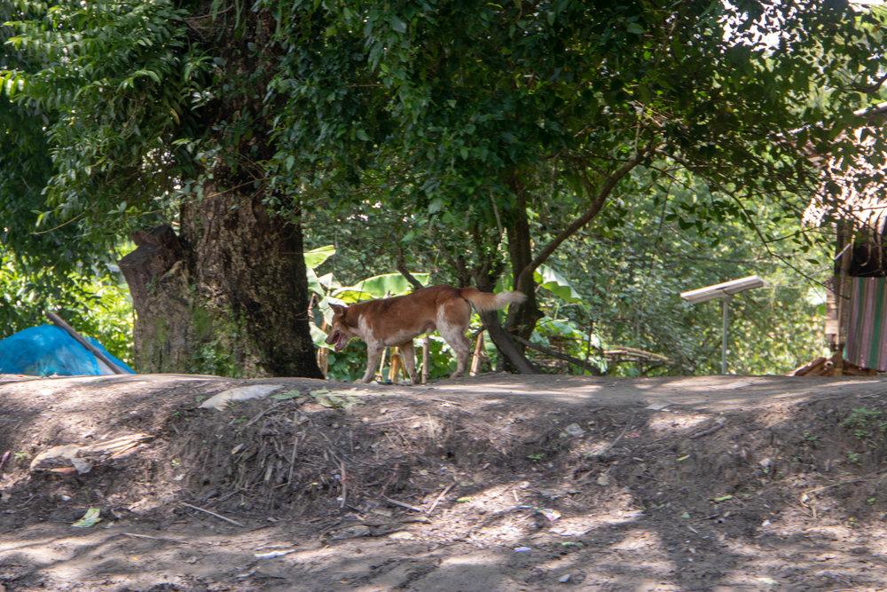 Myanmar-99.jpg