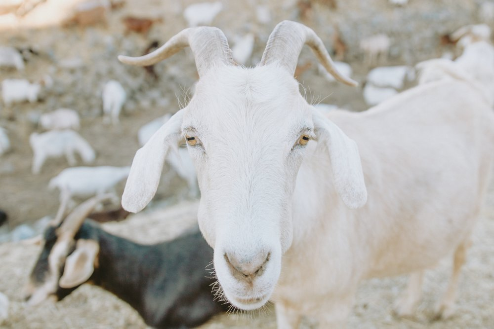 Eat your heart out, barnyard. (pic: Caleb Woods on Unsplash)