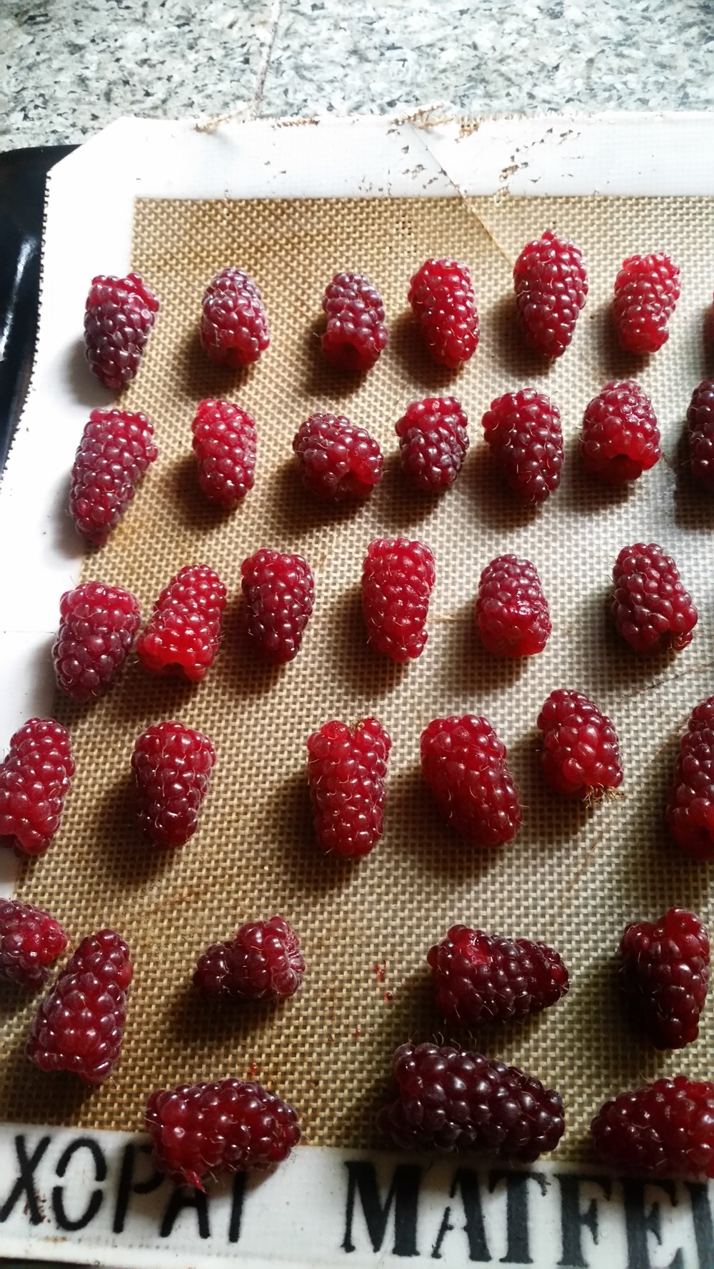 Ladies and gentlemen, I give you an army of tayberries.