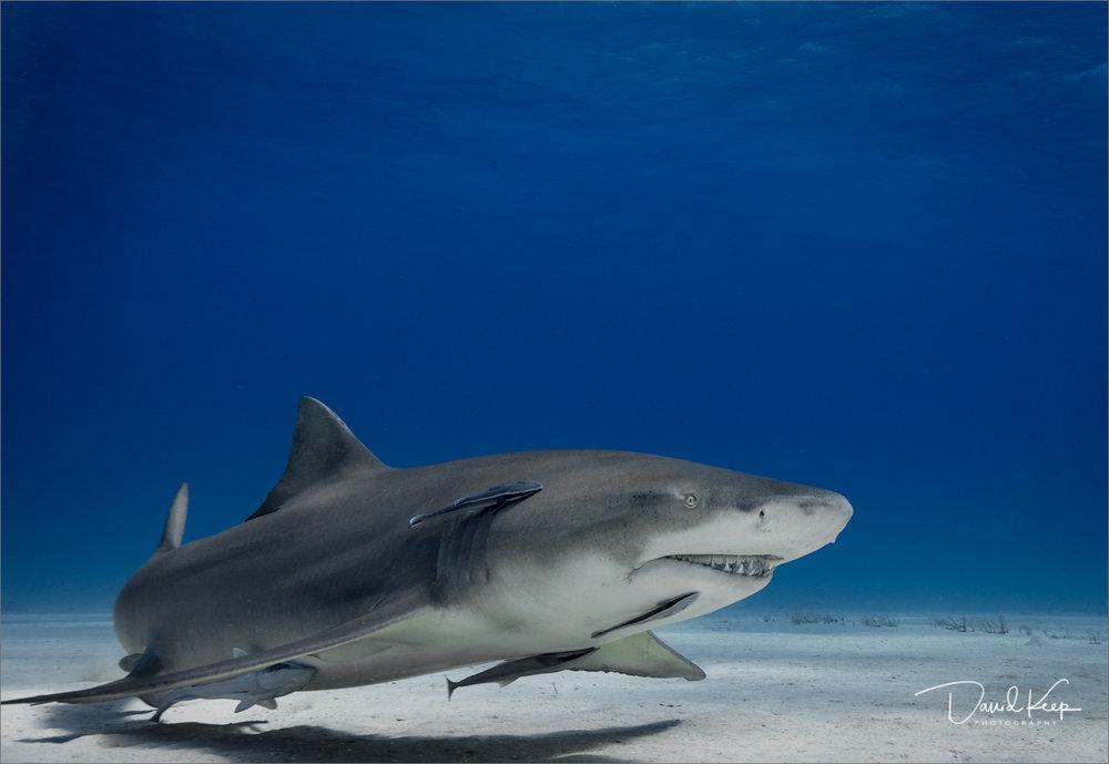 David Keep Underwater (16 of 31).JPG