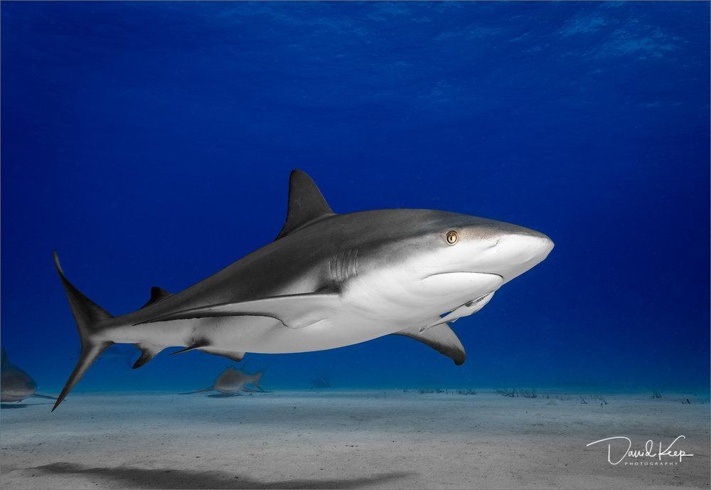 David Keep Underwater (17 of 31).JPG