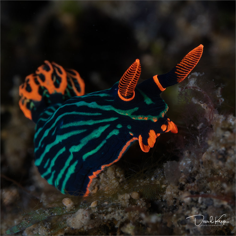 Nudibranch (4 of 13).JPG