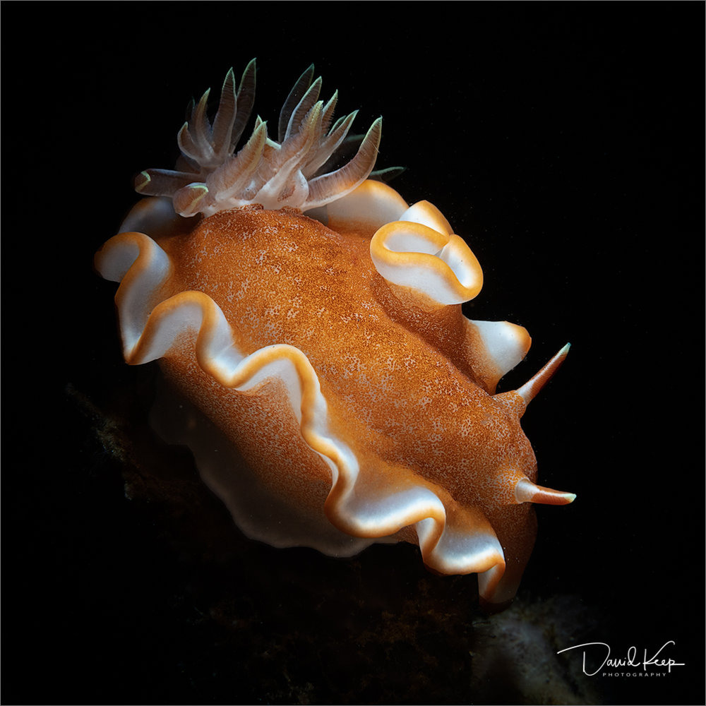 Nudibranch (5 of 13).JPG