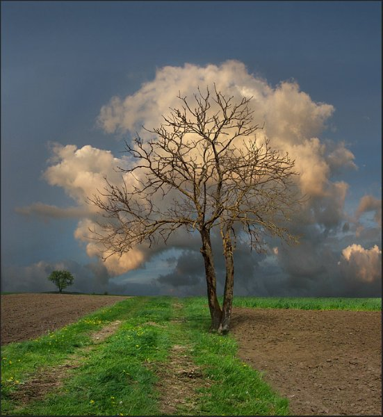 tree-cloud