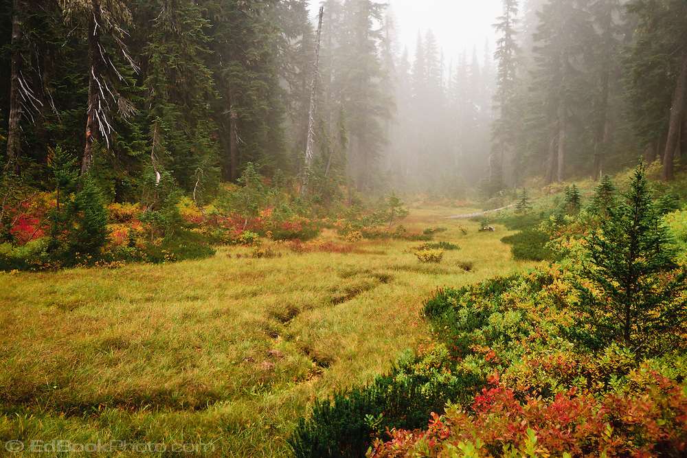 a meandering intermittent stream courses through a foggy meadow in autumn