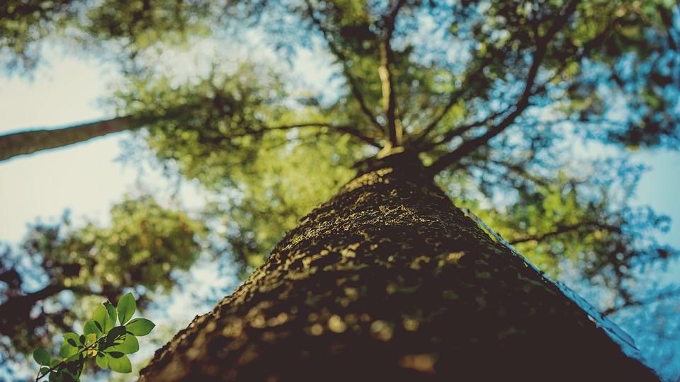 tree-trunk-1082098_960_720