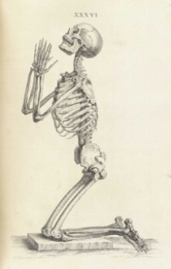 Osteographia, or The anatomy of the bones. Cheselden, William, 1688-1752.
